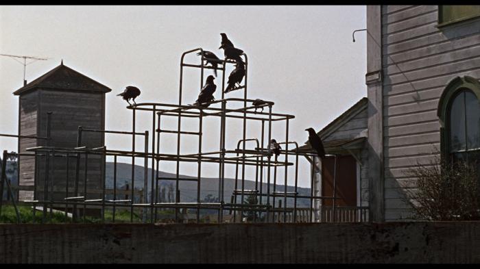 The Birds-3
